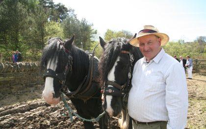 Horses at Work at Beamish Museum, County Durham