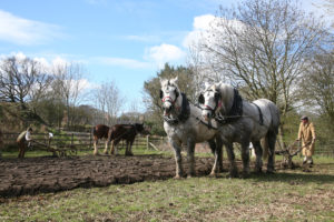 What's on at Beamish in 2020: Horses at Work. Horses ploughing the field