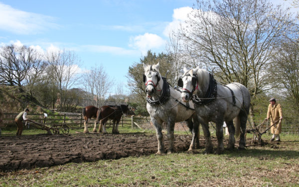 What's On 2020: Horses at Work. Horses ploughing the field